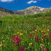 Colorado 14er Handies Peak Art Print