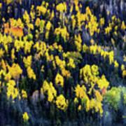 Colorado Autumn #5 Art Print