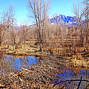 Colorado Beaver Ecosystem Art Print