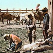Colorado: Branding Calves Art Print