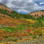Colorado Fall Colors 1 Art Print