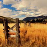 Colorado Meadow Art Print
