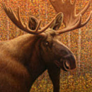 Colorado Moose Art Print by James W Johnson