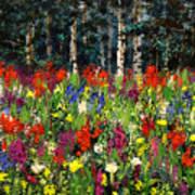 Colorado Rockies Wildflowers Art Print