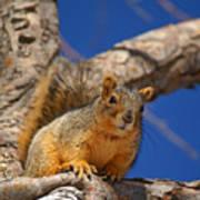 Colorado Squirrel Standoff Art Print