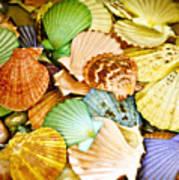 Colored Shells Art Print