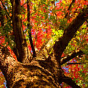 Colorful Autumn Abstract Art Print by James BO  Insogna