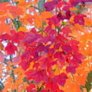 Colorful Autumn Leaves Art Print