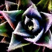 Colorful Cactus Art Print