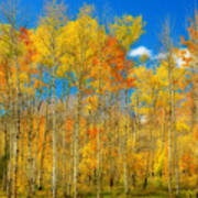 Colorful Colorado Fall Foliage Art Print