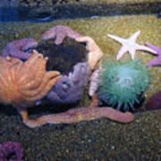 Colorful Coral Art Print