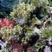 Colorful Coral Reef Art Print