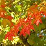 Colorful Fall Leaves Red Nature Landscape Baslee Troutman Art Print