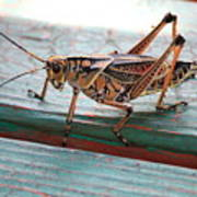 Colorful Grasshopper Art Print