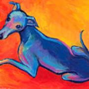 Colorful Greyhound Whippet Dog Painting Print by Svetlana Novikova