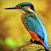 Colorful Kingfisher Art Print