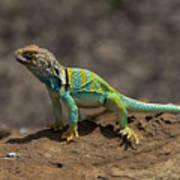 Colorful Lizard Art Print