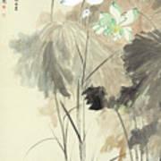 Colorful Lotus Art Print