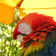 Colorful Macaw-1 Art Print