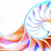 Colorful Nautilus Art Print