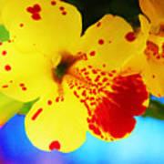 Colorful Pansies Art Print