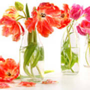 Colorful Spring Tulips In Old Milk Bottles Art Print