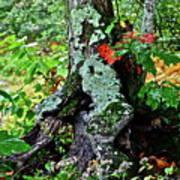 Colorful Stump Art Print