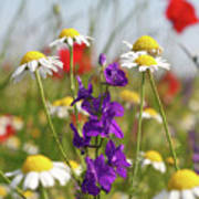Colorful Wild Flowers Nature Scene Art Print