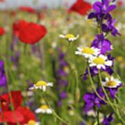 Colorful Wild Flowers Nature Spring Scene Art Print