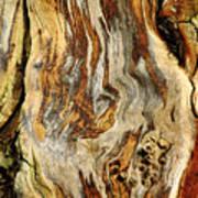 Colors Of Bark Art Print