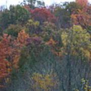 Color's Of Fall Art Print