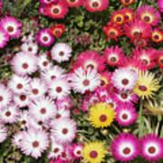 Colors Of Spring Art Print