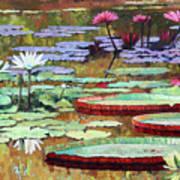 Colors on the Lily Pond Art Print