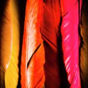 Colourful Feather Art Art Print