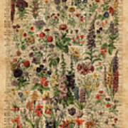 Colourful Meadow Flowers Over Vintage Dictionary Book Page  Art Print