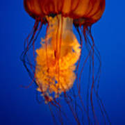 Colours Of The Jelly Fish Art Print by Naman Imagery