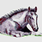 Colt Art Print