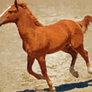 Colt Running Art Print