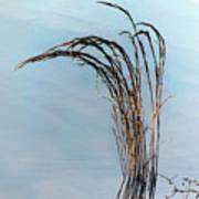Combie Lake Reeds Art Print