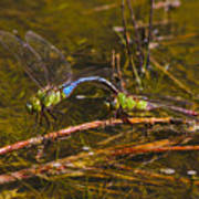 Come Along With Me Dragonflies Art Print