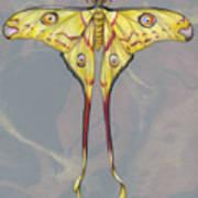 Comet Moth Art Print