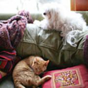 Comfy Bella And Cat Art Print
