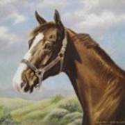 Commission Chestnut Horse Art Print by Dorothy Coatsworth