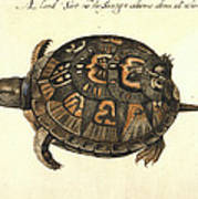 Common Box Tortoise, 1585 Art Print