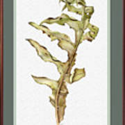 Compass Plant, Fall Art Print