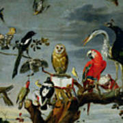 Concert Of Birds Print by Frans Snijders