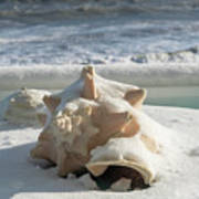Conch Shell In Snow Art Print