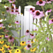 Cone Flowers And Fence Art Print