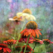 Coneflower Garden 2789 Idp_2 Art Print
