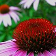 Coneflowers Art Print by Juergen Roth